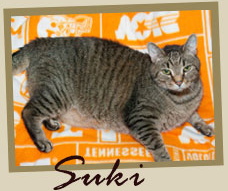 Suki is a 6-year-old, 15lb Tabby participating in the contest